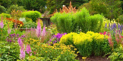 image - Garden Weeds