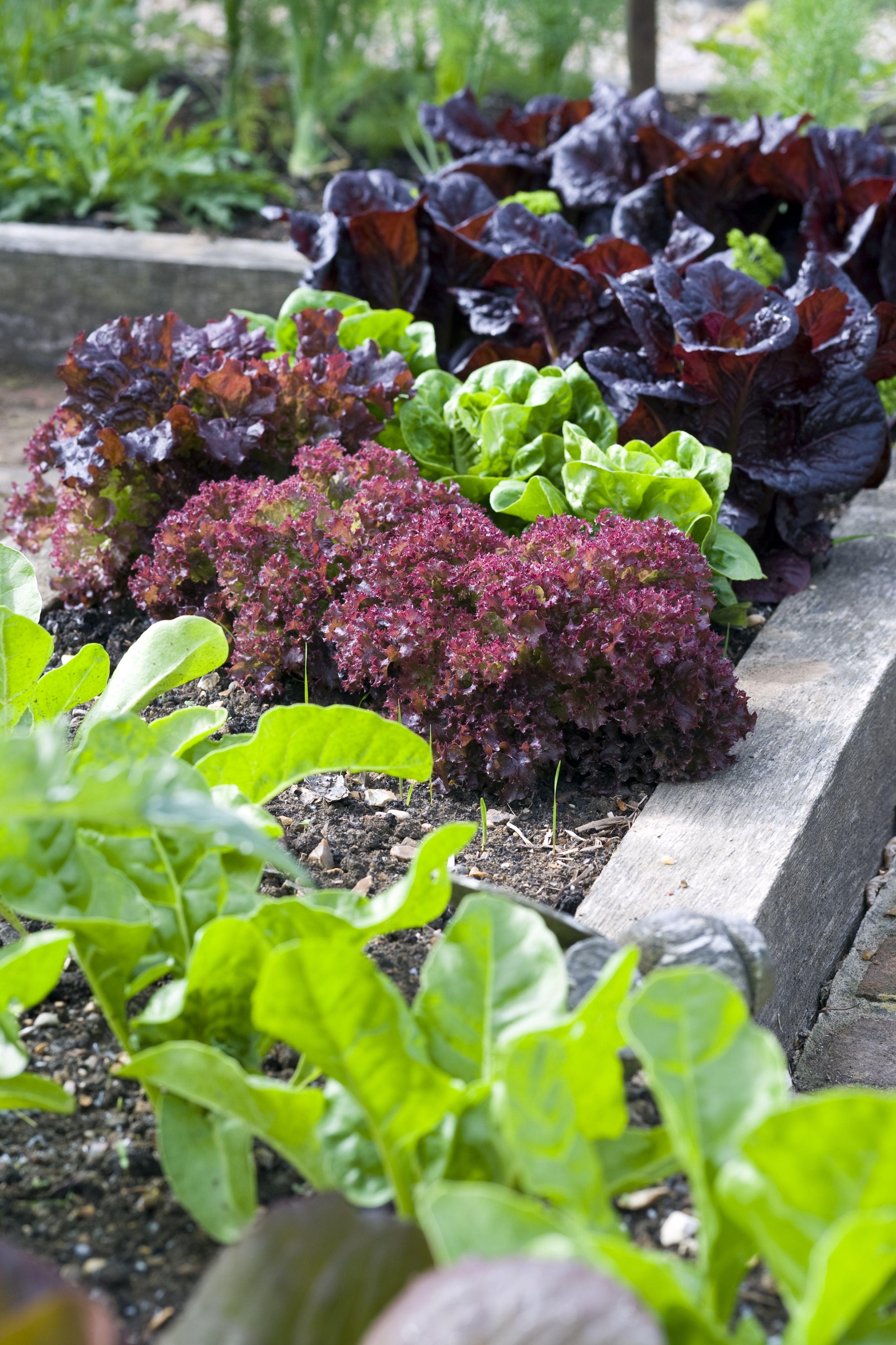 dp oz precision killer gardens outdoor weed for com gel amazon grass vegetable garden roundup