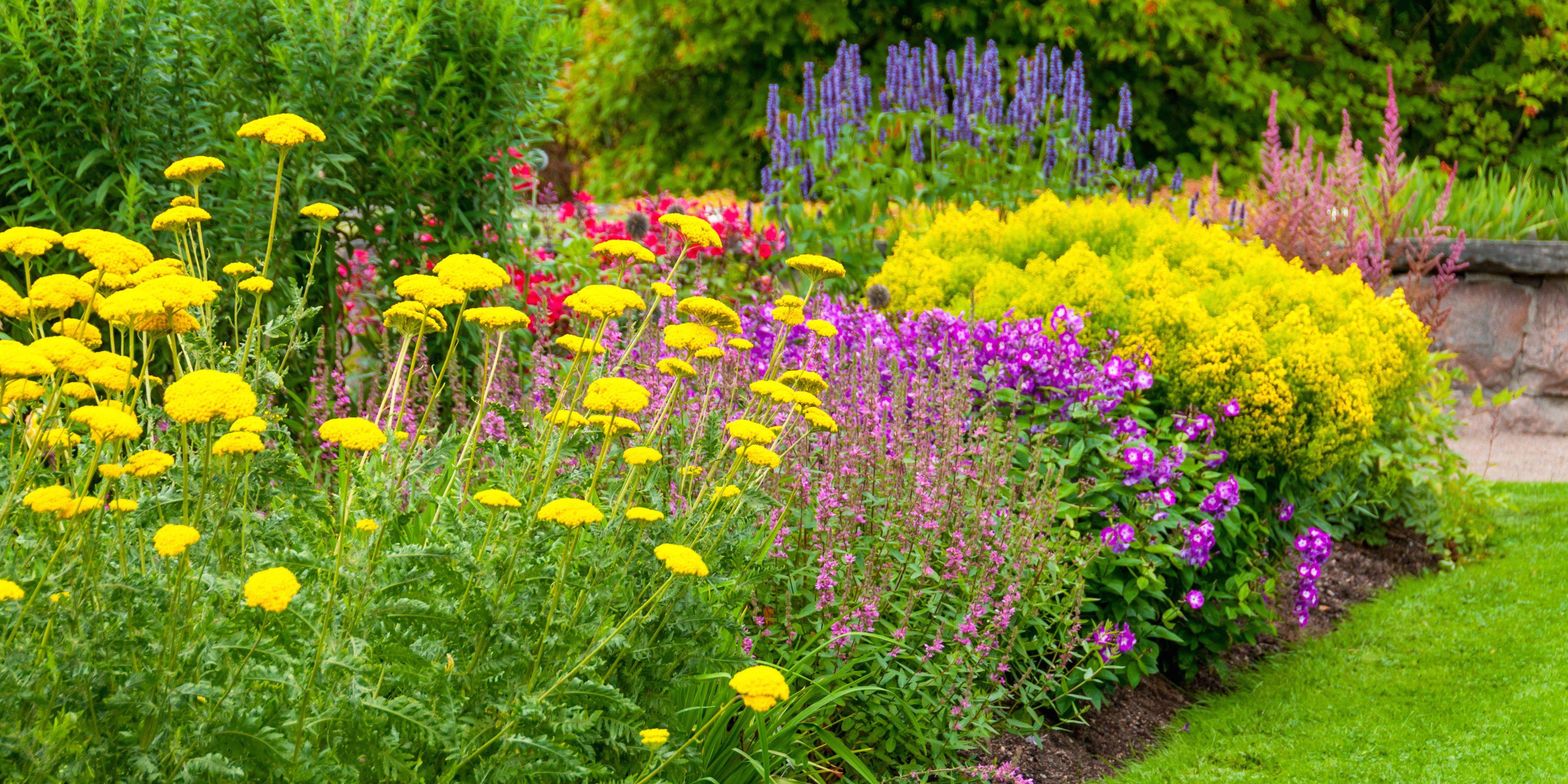 18 Best Summer Flowers Beautiful Flowers That Bloom All Summer
