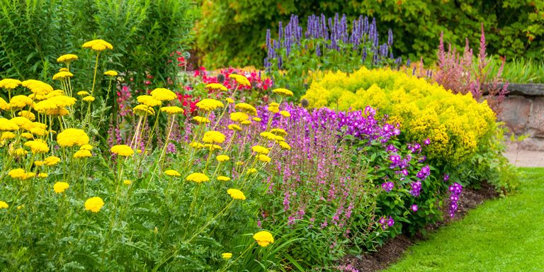 18 Best Summer Flowers Beautiful Flowers That Bloom All