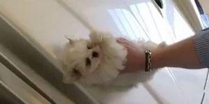 brat-washes-maserati-with-puppy