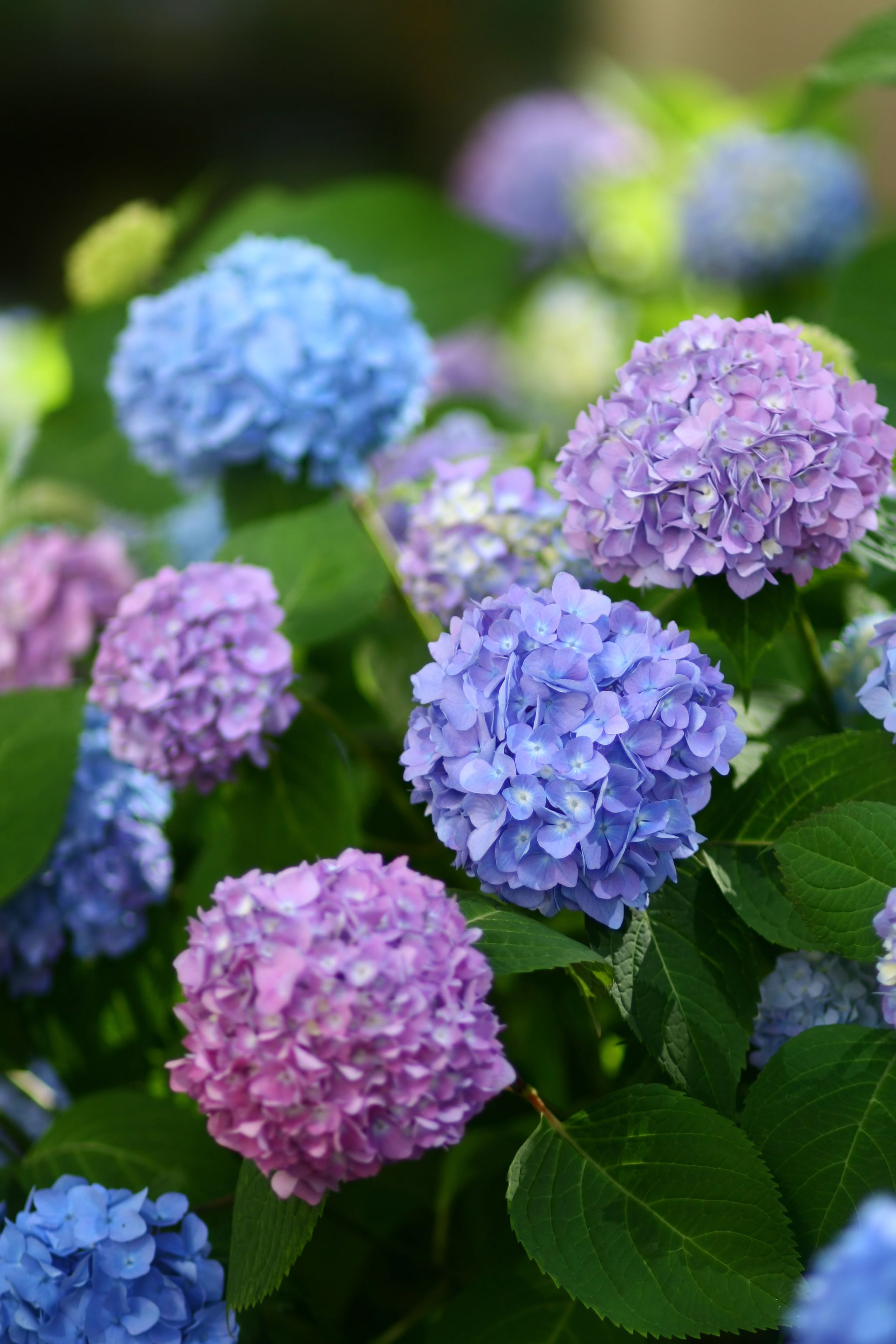 15 Poisonous Plants And Flowers Toxic Plants That Could Kill You