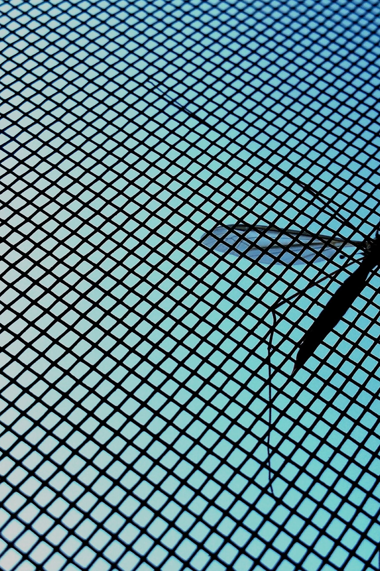 mosquito on a screen door