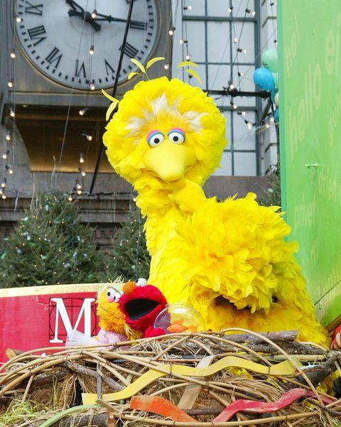 Yellow, Beak, Teal, Clock, Nest, Bird nest, Bird, Quartz clock, Wall clock, Toy,