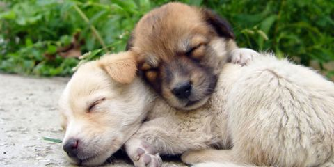 sharing cute puppy photos with your hubby will save your marriage