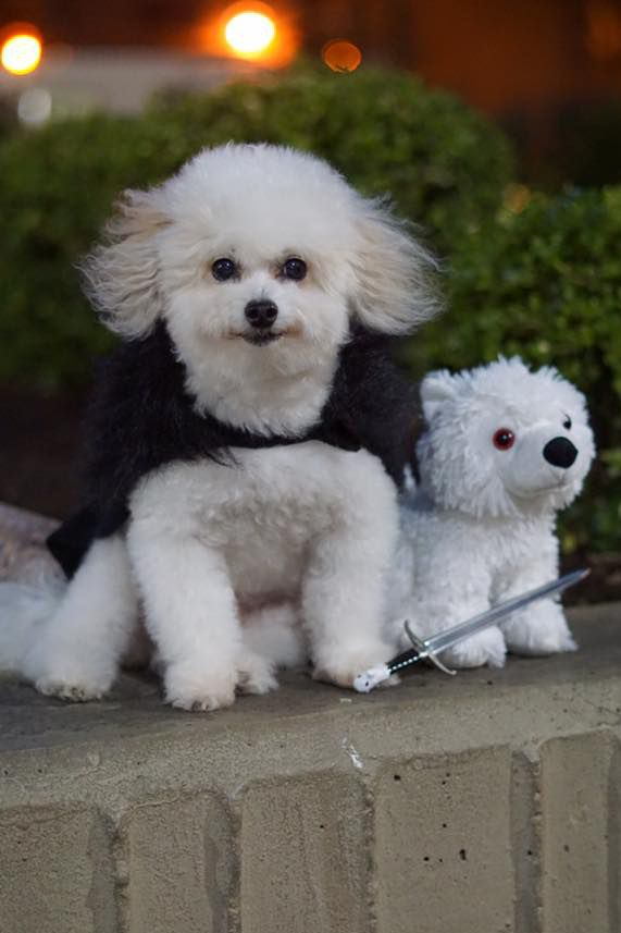 & 34 Best Dog and Cat Halloween Costumes 2018 - Cute Pet Costume Ideas
