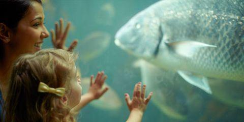 Fish, Fish, Aquarium, Marine biology, Organism, Underwater, Mouth,