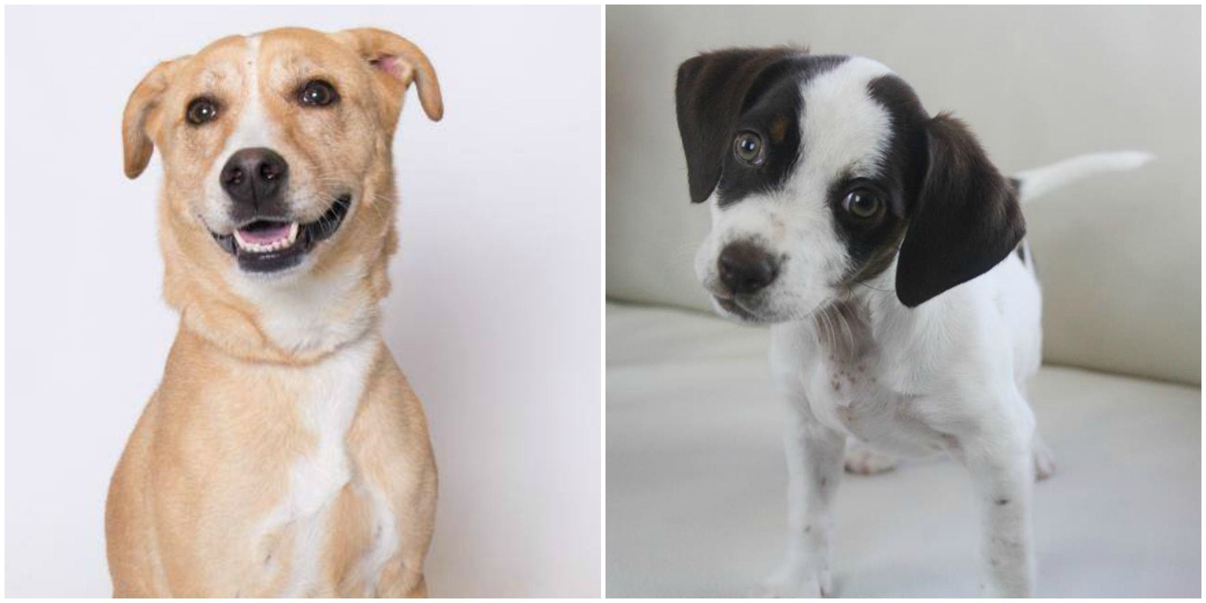 Cutest Mixed-Breed Dogs You Can Adopt - National Mutt Day