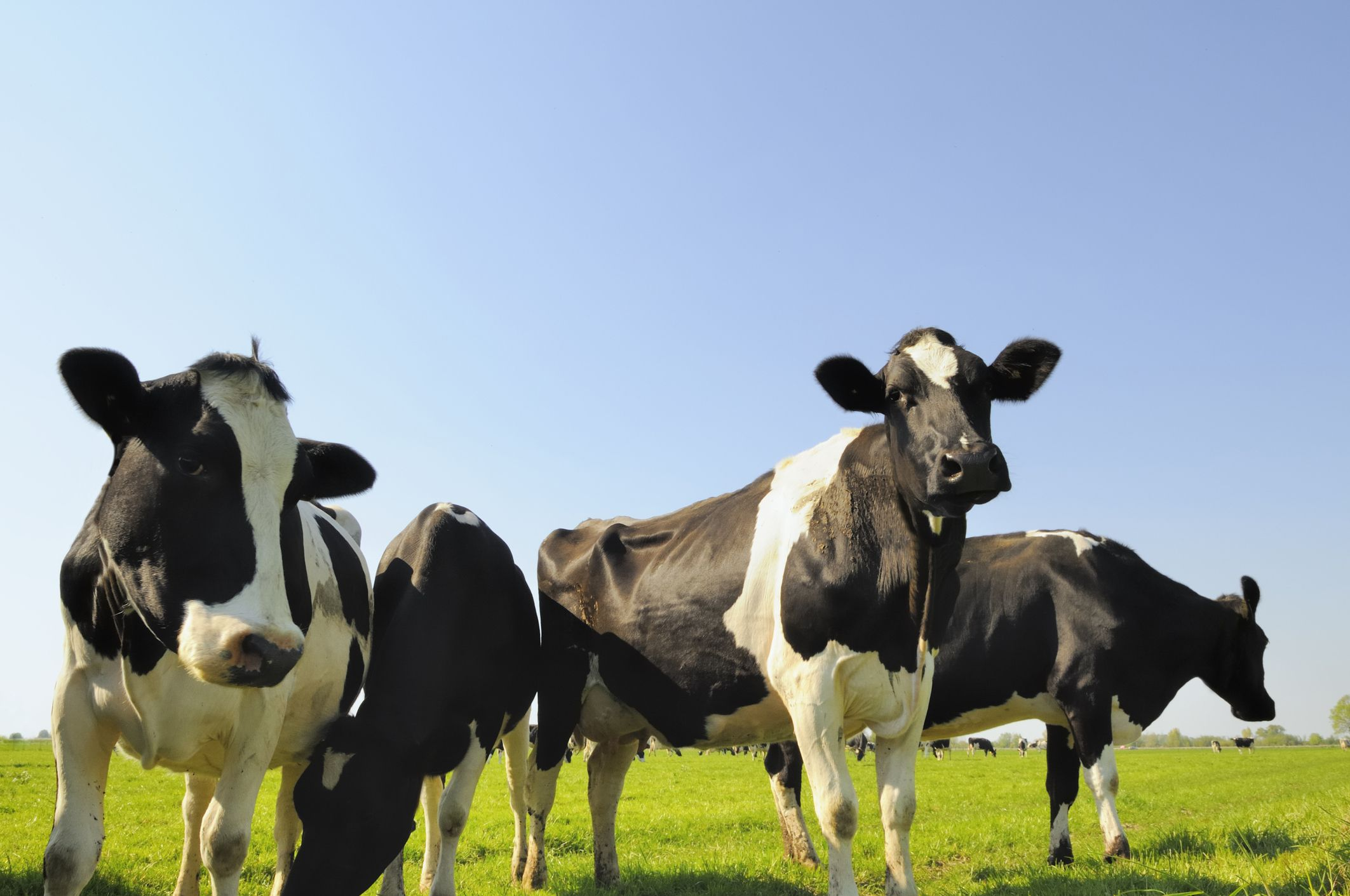 What Is Grass-Fed Milk - Organic Milk Options and Benefits