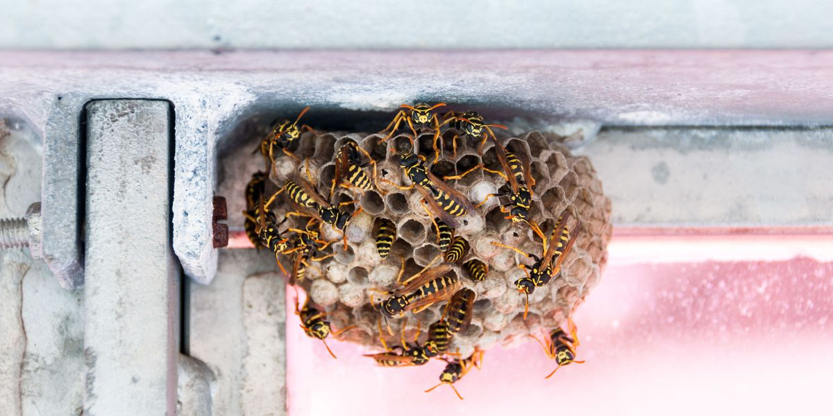 How to Get Rid of Insects and Pests -- Heloise Hints