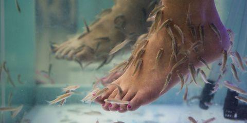 fish-pedicure