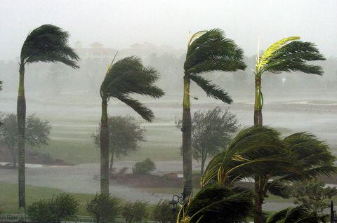 Vegetation, Tree, Atmospheric phenomenon, Elaeis, Palm tree, Attalea speciosa, Plant, Arecales, Tropics, Mist,