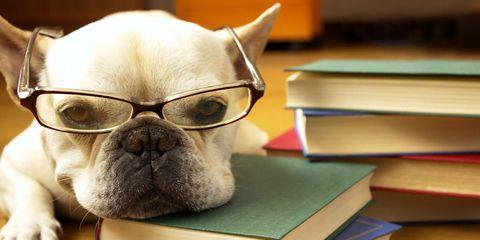 The Top 25 Smartest Dog Breeds