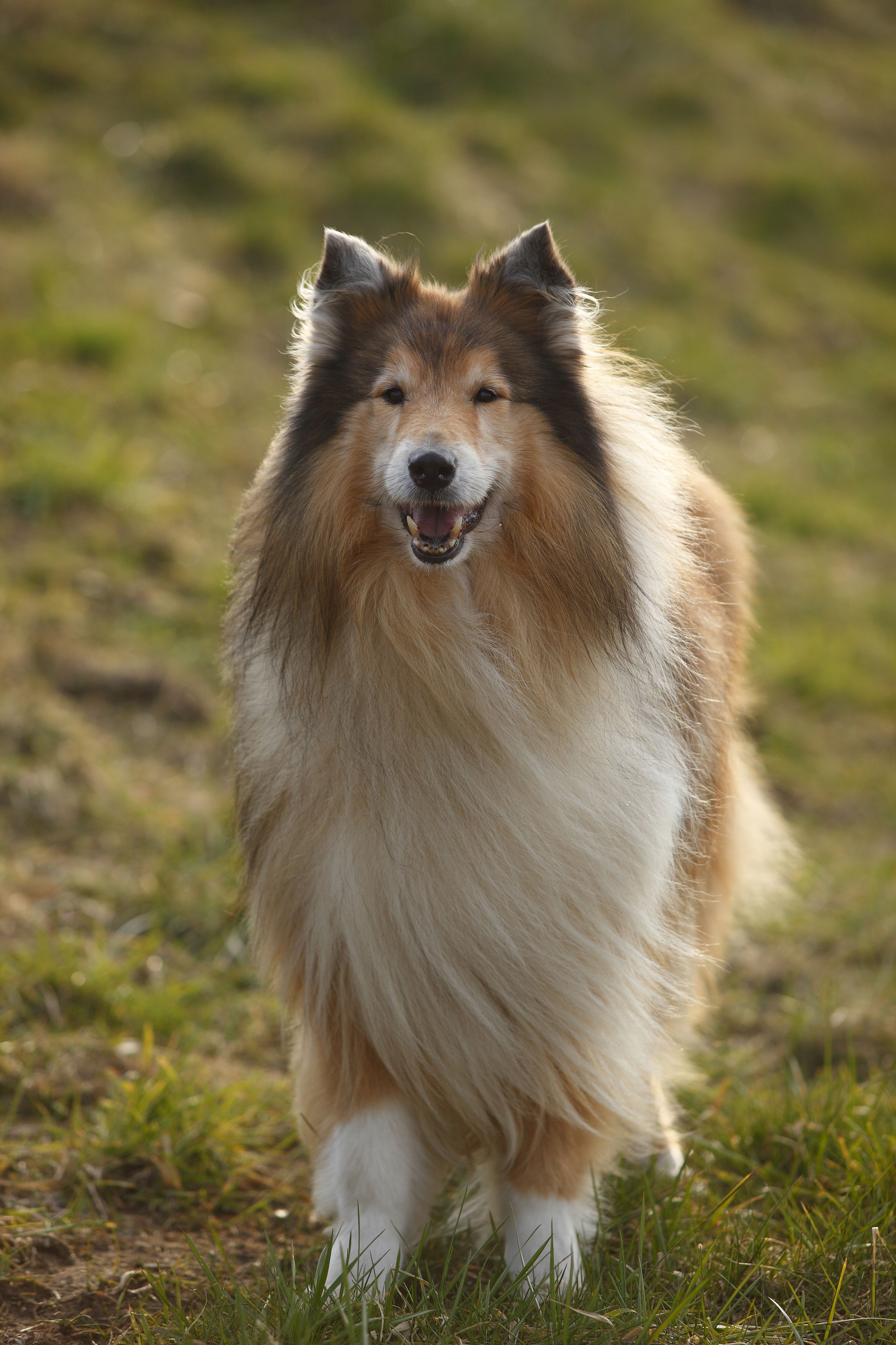 40 Best Medium Sized Dog Breeds List Of Popular Cute Medium Sized