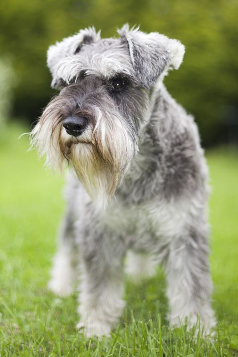 Small Dog Breeds That Make for Perfect Companions