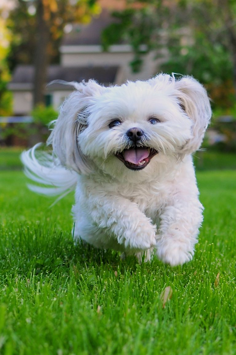 List Of Top  Best Family Dogs
