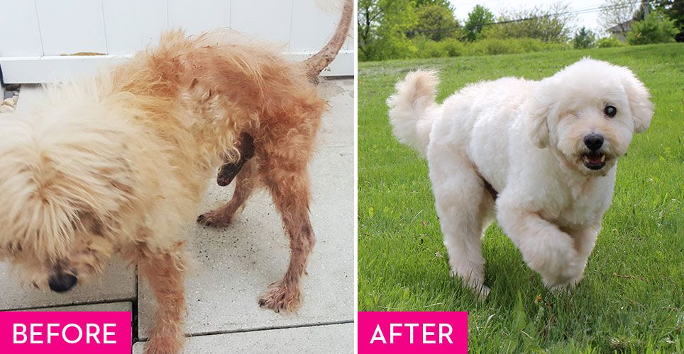 Rescue Dogs Before And After They Found A Fur Ever Home