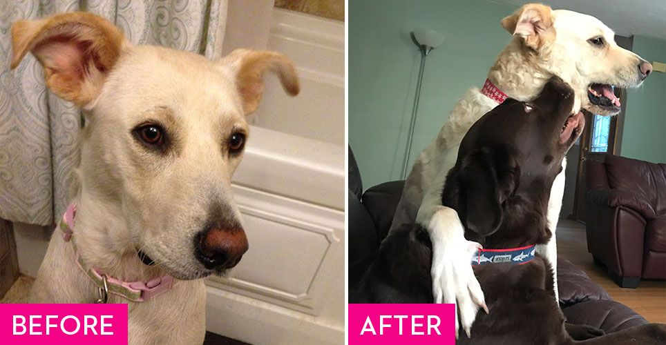 Rescue Dogs Before and After They Found a Fur-Ever Home