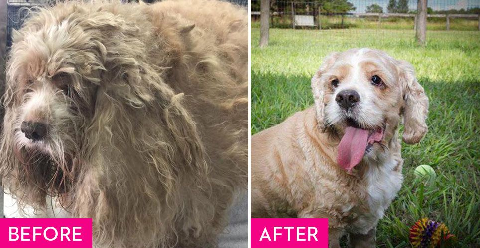 Rescue Dogs Before and After They Found a Fur-Ever Home - Rescue Dog