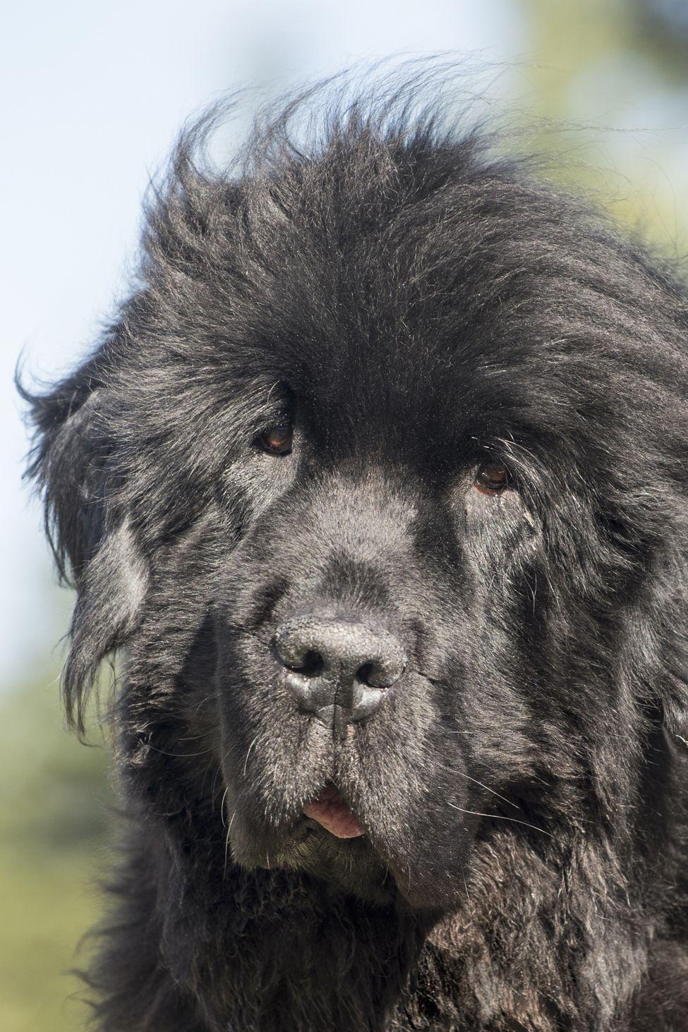 15 Best Lazy Dog Breeds Laziest Low Energy Dogs