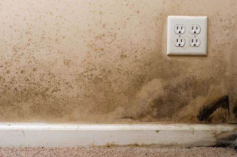 Mold And Mildew Removal Tips How To Get Rid Of Mold And