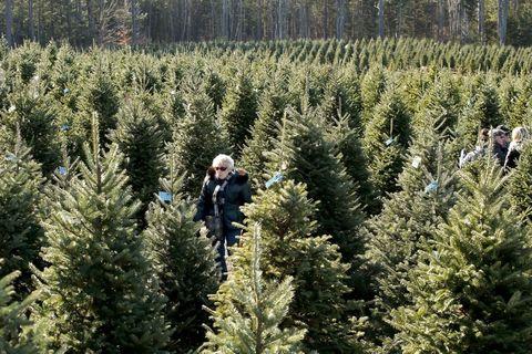 christmas tree shopping - Cost Of Christmas Tree