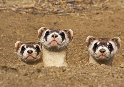25 endangered animals we may soon lose forever endangered species
