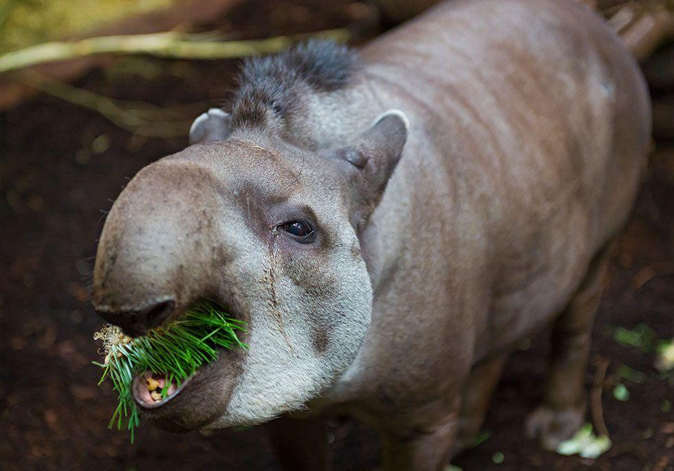 25+ Endangered Animals We May Soon Lose Forever - Endangered
