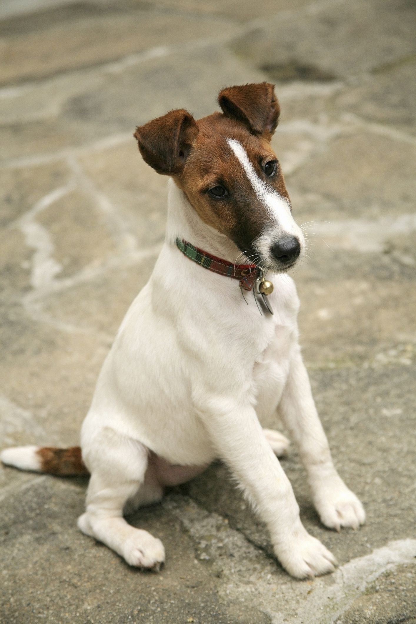 35 Best Small Dog Breeds - List of Top Small Dogs with Pictures