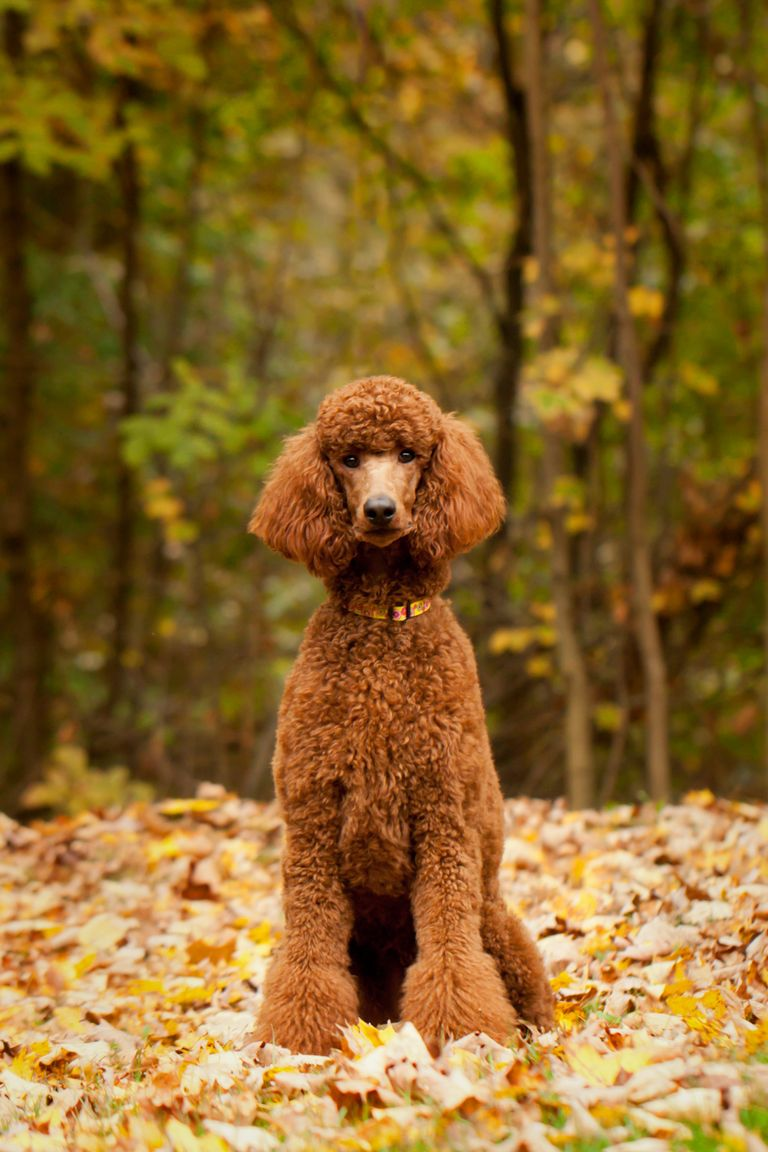 H Dog Names 20 Most Popular...