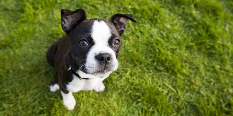 Best Dog Breeds - Most Popular Types of Dogs