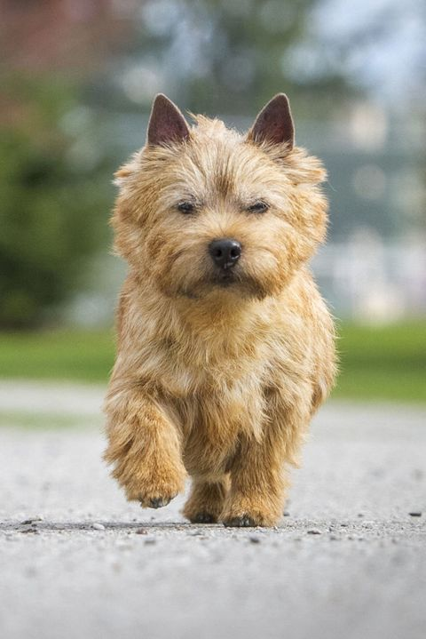 20 Most Popular Dog Names 2018 - Cute Boy and Girl Dog Names