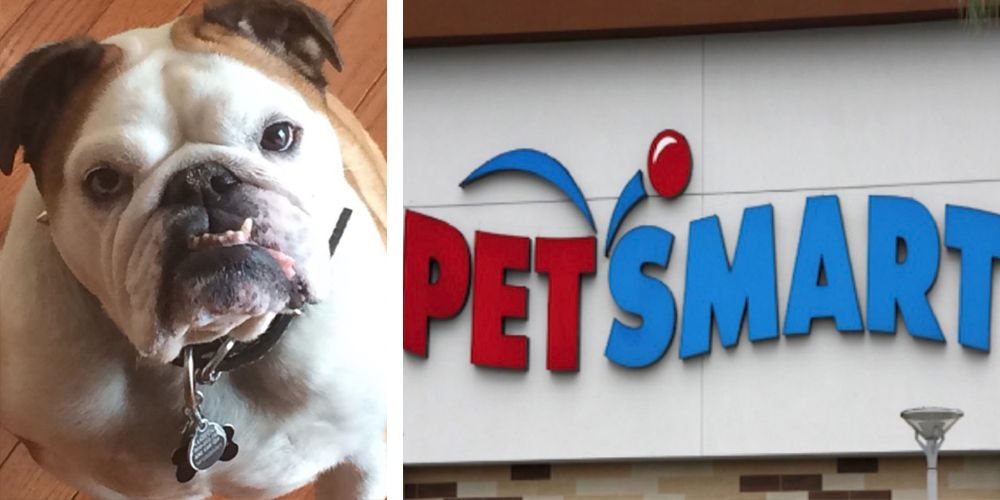 Owners Claim Their Dogs Died After Petsmart Groomings In New Jersey