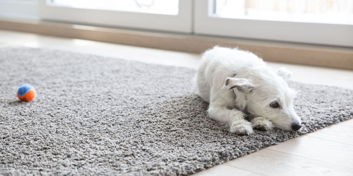 How To Clean Carpet Best Way Get Stains Out Of