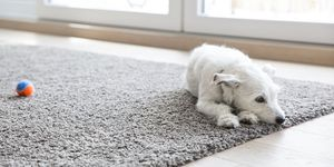 How to Get Rid of Cat Pee Smell on Carpet and Wood - Remove