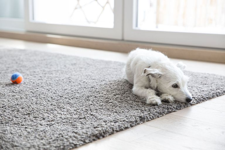 best way to clean carpet how to clean carpet best way to get stains out of carpet 30875