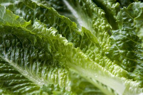 Leaf, Leaf vegetable, Savoy cabbage, Plant, Chard, Lettuce, Vegetable, Flower, Spring greens, Romaine lettuce,