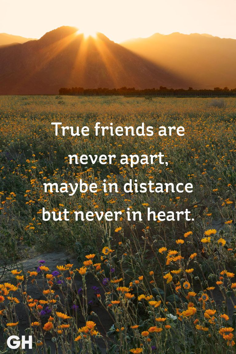 Quotes About Friends: 20 Short Friendship Quotes To Share With Your Best Friend
