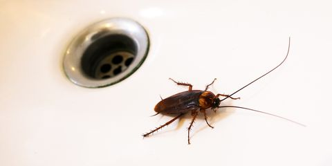 How to Get Rid of Roaches - How to Kill Cockroaches and Stop an ...