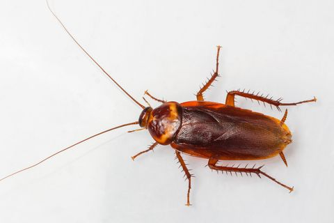 Stupendous How To Get Rid Of Roaches How To Kill Cockroaches And Stop Home Remodeling Inspirations Basidirectenergyitoicom