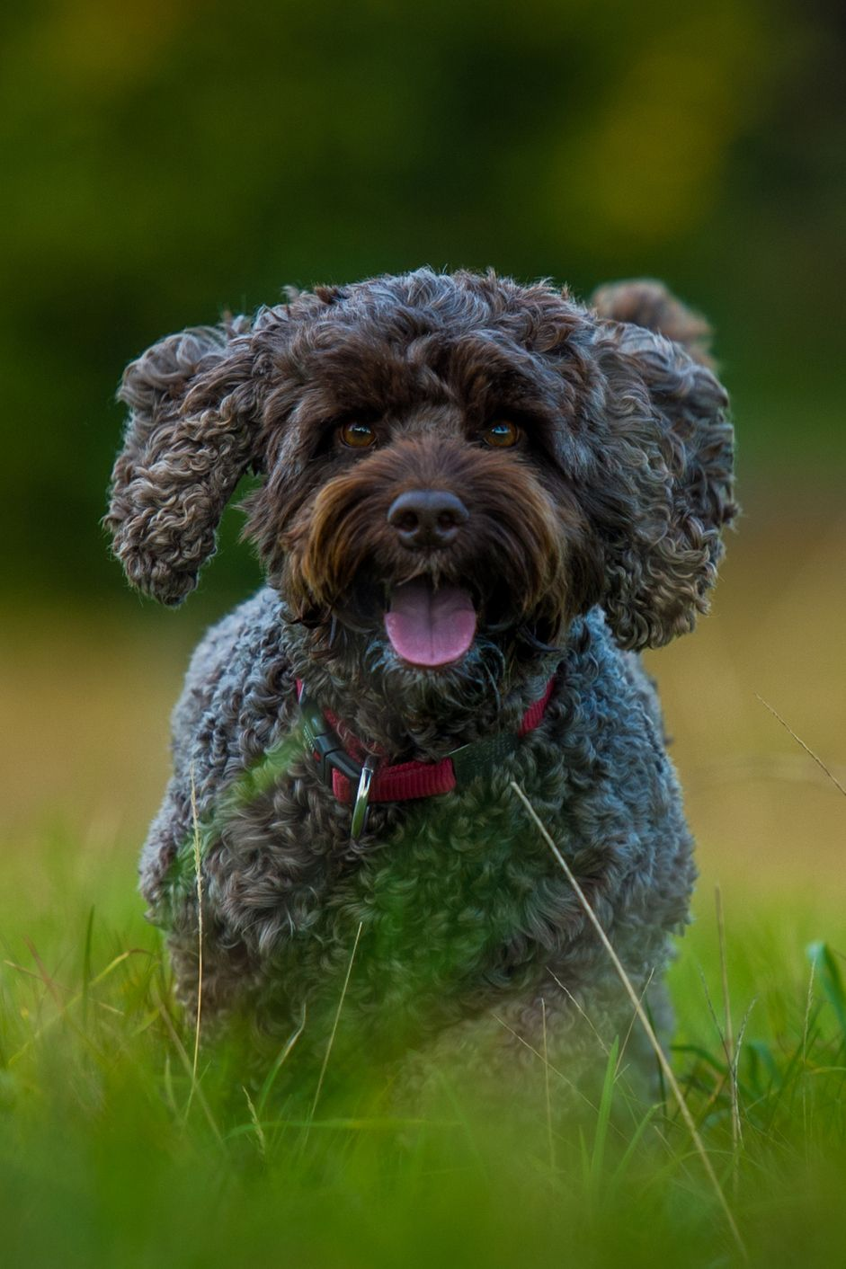 Small mixed dog breeds pictures