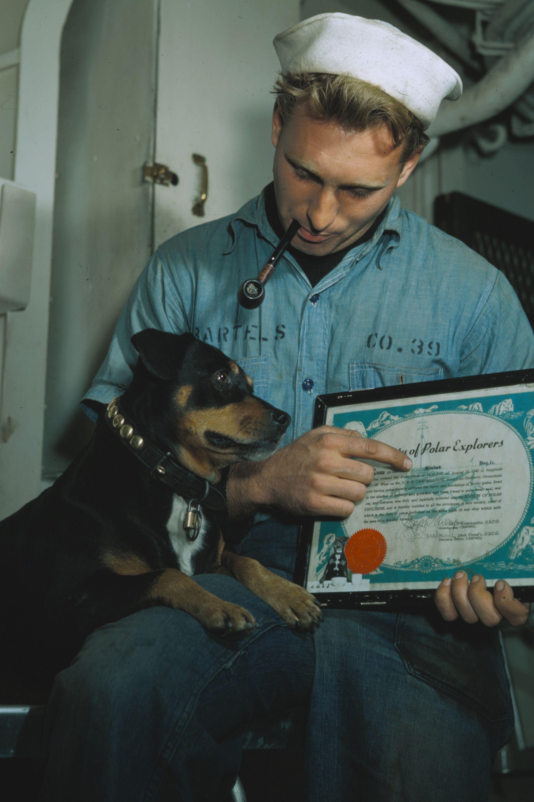 可愛い犬のハッピー写真集 ― 幸せホルモンUPで心から健康に