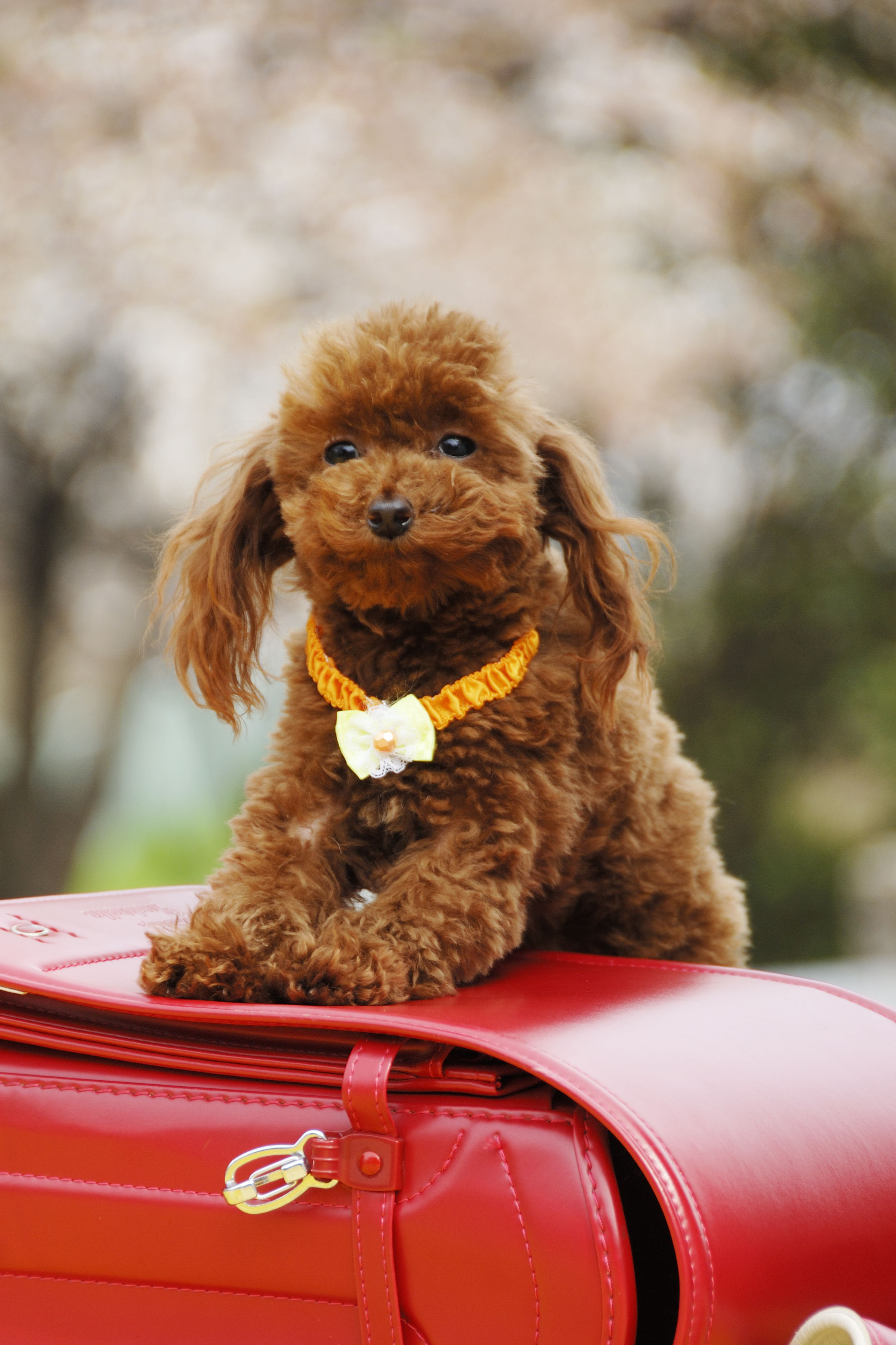 Small mix dog breeds list and pictures
