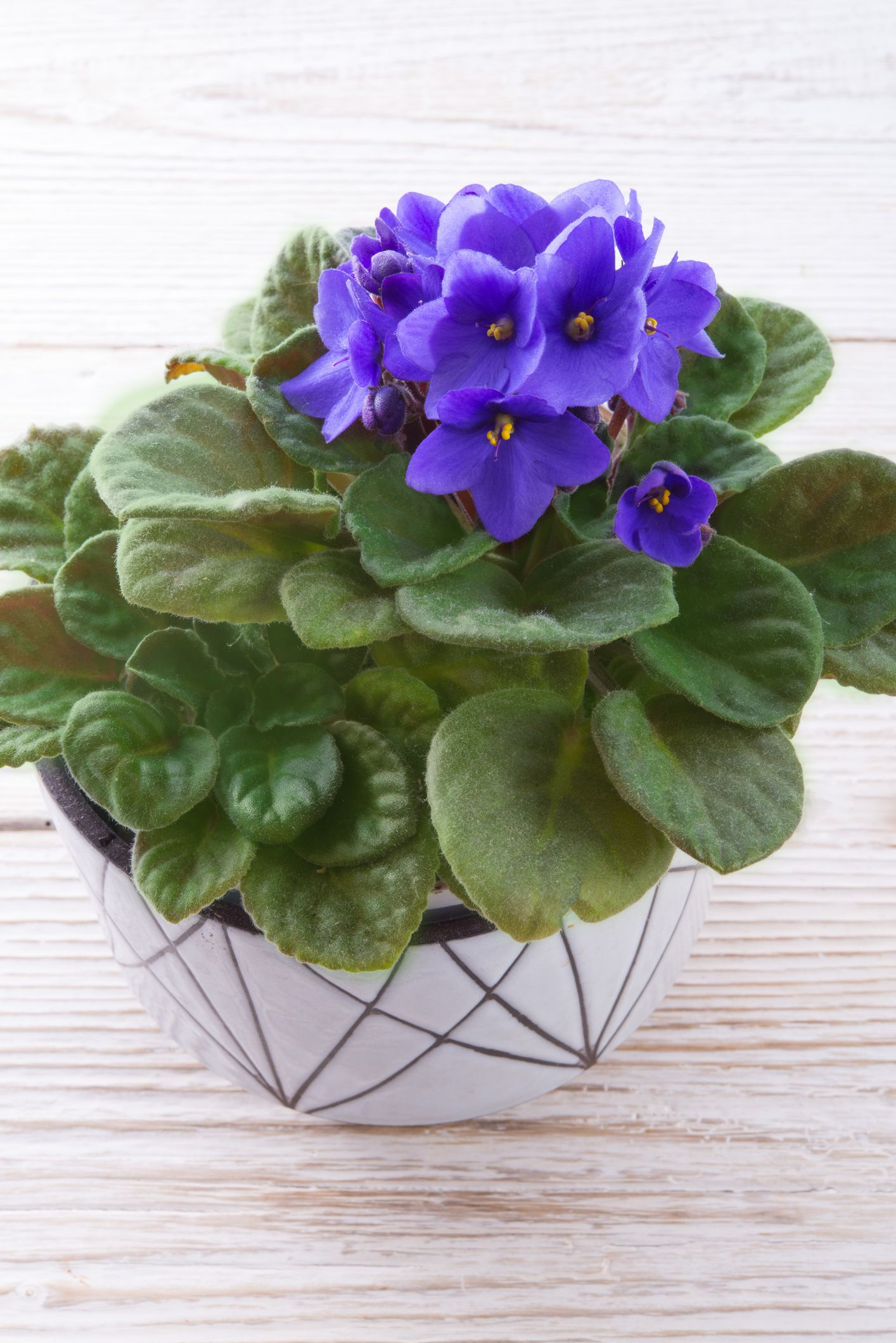 30 Easy Houseplants Easy To Care For Indoor Plants
