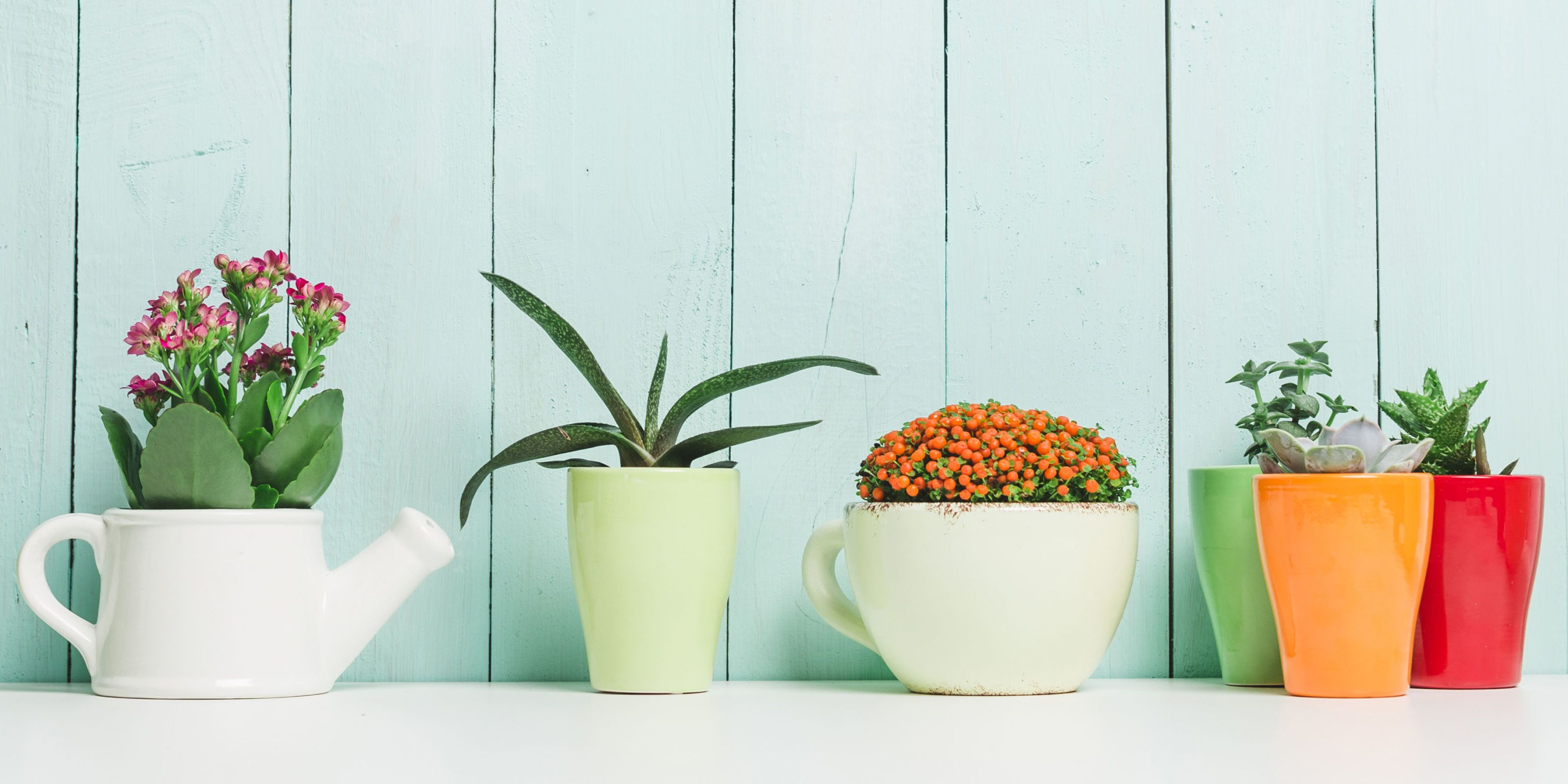 Exceptional Indoor Plants