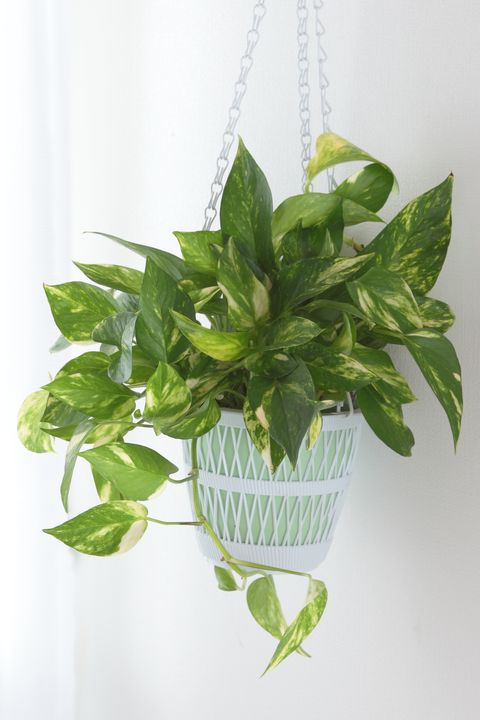 25 Easy Houseplants - Easy To Care For Indoor Plants House Plant Kitchen on seasonal house plants, outdoor house plants, beach house plants, trim house plants, jungle house plants, vinyl house plants, botanical house plants, living house plants, italian house plants, east facing house plants, water house plants, contemporary house plants, interior house plants, fridge house plants, propagating house plants, atrium house plants, decorative house plants, floral house plants, braided house plants, corner house plants,