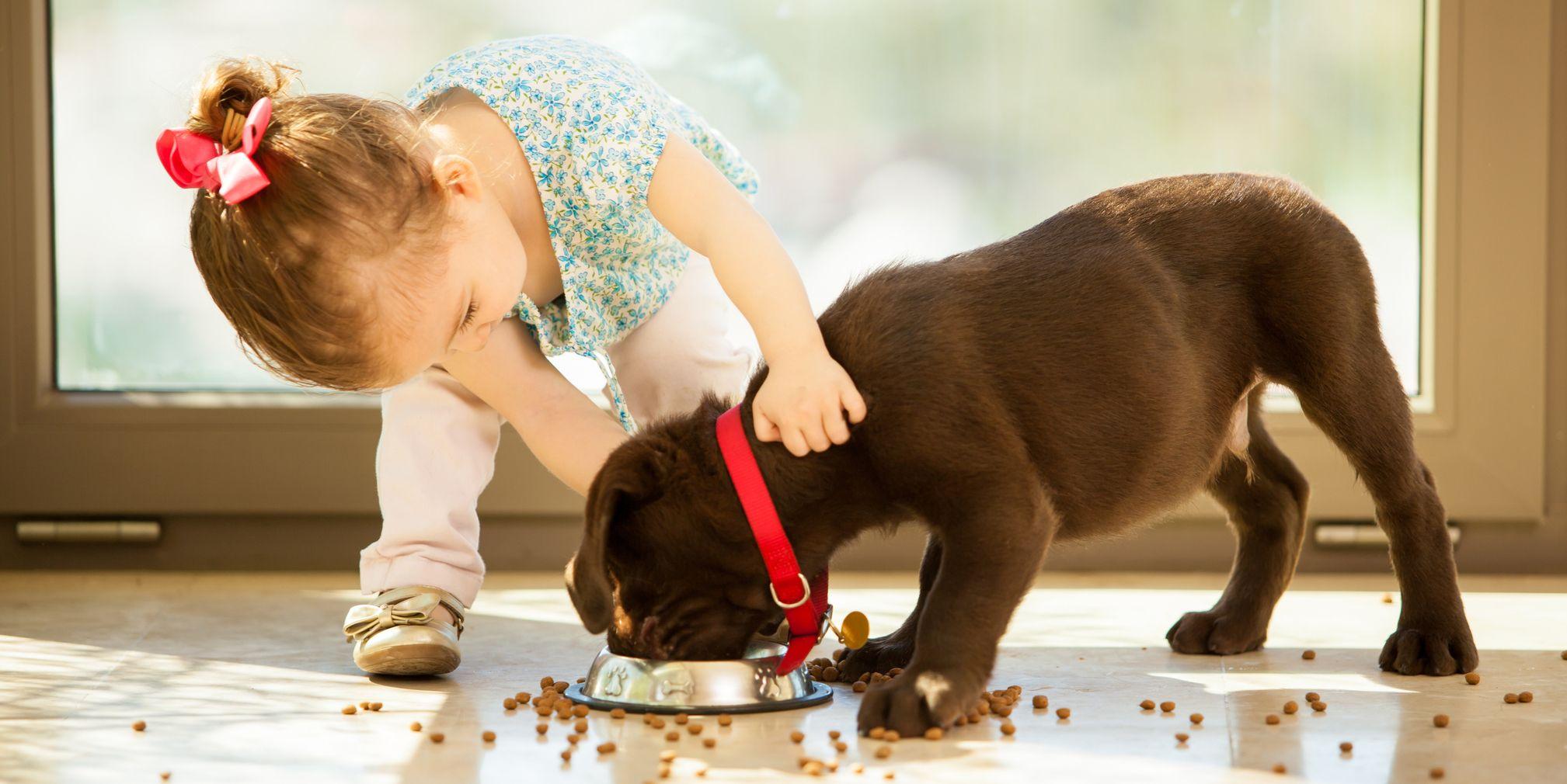 20 Best Dog Breeds For Kids Good