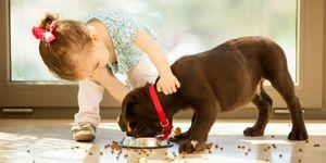 little girl and labrador retriever puppy