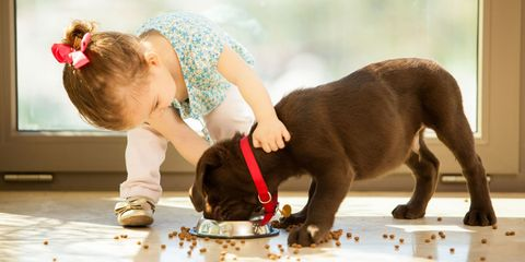 Little And Labrador Retriever Puppy