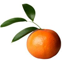 orange-spiced-beef-1046